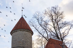 Birds flying under towers in old Tallinn city Royalty Free Stock Image