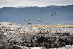 Birds flying,Ushuaia, Argentina Stock Image