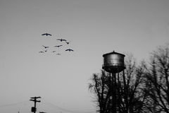 Birds Flying by Water Tower Royalty Free Stock Image