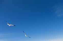 Birds flying in white sky Royalty Free Stock Image