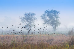 Birds flying in the winter mist Royalty Free Stock Photography