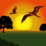 Birds Flying With Sunset Royalty Free Stock Photos