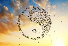 Birds flying in Yin Yang formation at sunset sky. Silhouette of birds flying in Yin Yang formation at sunset sky Stock Photography