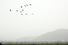 Birds in the fog Royalty Free Stock Image