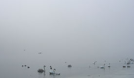 Birds in the Fog Royalty Free Stock Photo