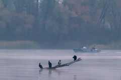 Birds in the Fog and Fishing Royalty Free Stock Photography