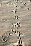 Birds footprint. Stock Photography