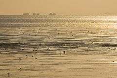 Birds foraging at Wadden Sea royalty free stock photo