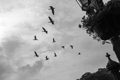 Birds, Forbidding Grey Sky and Graveyard Cross. In Black and White stock photos