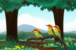 Birds in the forest. Beautiful birds with beautiful scenery Royalty Free Stock Images