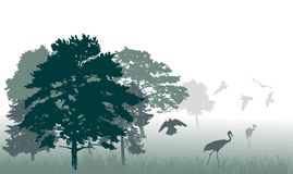 Birds in forest illustration Stock Image