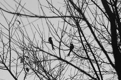 Birds in the forest. Two birds on tree branch royalty free stock photos