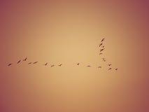 Birds formation Stock Photo
