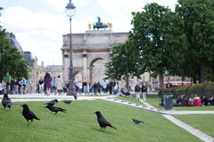Birds in front of the Louve. Paris, France Royalty Free Stock Image