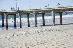 Birds in front of pier Royalty Free Stock Photos