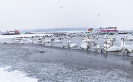Birds in the frozen river with trapped boats in ice Royalty Free Stock Image