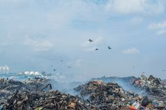 Birds at the garbage dump full of smoke, litter, plastic bottles,rubbish and trash at tropical island. Birds at the huge garbage dump full of smoke,litter Stock Images