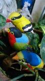 Birds in the garden Royalty Free Stock Photos