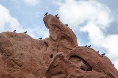 The Birds at Garden of the Gods Royalty Free Stock Photos