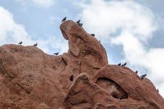 The Birds at Garden of the Gods. A group of birds perched atop a rock formation at Garden of the Gods in Colorado Springs, Colorado Royalty Free Stock Photos