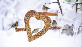 Birds garden manger in winter Stock Image