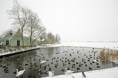 Birds and geese in the Netherlands in winter Royalty Free Stock Photos