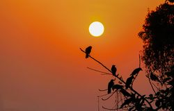 Sunset With Birds. Birds are getting back to their home on sunset Royalty Free Stock Images