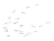Birds gliding on clear sky (b&w) Royalty Free Stock Photos