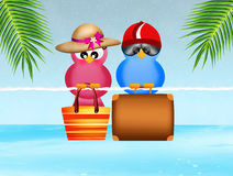 Birds go on vacation Stock Images