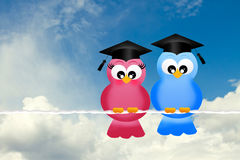 Birds graduates Stock Image