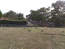 Birds on green grass. Birds enjoy to eating in park Royalty Free Stock Images