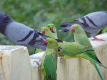 Birds group stock photo