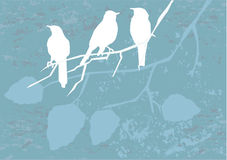 Birds on grunge background Stock Photography