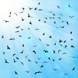 Birds, gulls, black silhouette on blue background Stock Images