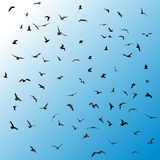 Birds, gulls, black silhouette on blue background. Vector Stock Photo