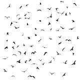 Birds, gulls, black silhouette on white background. Vector Royalty Free Stock Photos