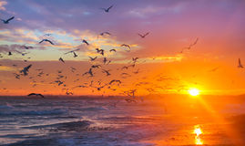 Birds gulls in the rays of the sun at sunset on a background of Royalty Free Stock Photo