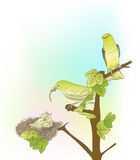 Birds. Hand drawn little green birds feeding their young in the nest Stock Photography