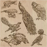 BIRDS - An hand drawn vector pack, line art. BIRDS around the World. Collection of an hand drawn vector illustrations. Freehand sketches. Line art. Each drawing Royalty Free Stock Photos