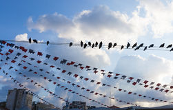 Birds hanging on a wire Stock Photos
