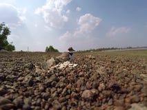 Birds hatch stock video footage