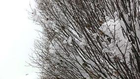 Birds hiding in treetops stock footage