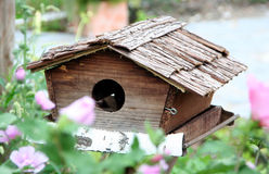 Birds home Royalty Free Stock Images