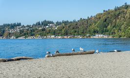 Birds and Homes. A veiw of shoreline birds and waterfront homes from Seahurst Beach Park in Burien, Washington stock photos