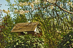 Birds house and feeder. Placed outside in garden area on a tree with blooming flowers stock image