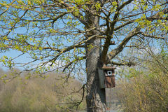 Birds house, hanging on a fresh budding maple tree. At springtime stock photos