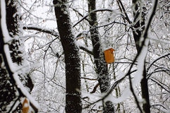 The birds house in the snowy forest Stock Images