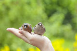 Birds on humans hand Royalty Free Stock Photos