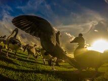 Birds on Hyde park Stock Photo