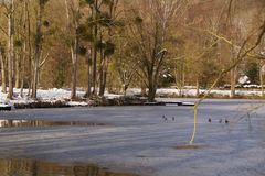 Birds on the ice-cold lake - France stock image